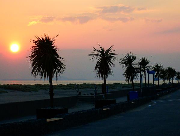 Picture of sunset over palm tree along prom